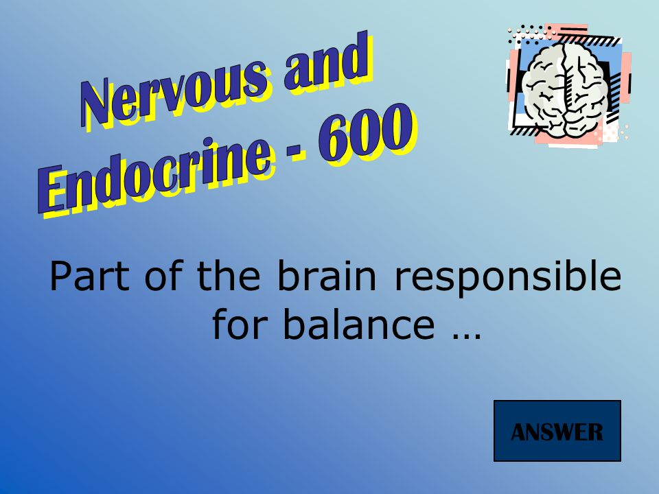 The brain and the spinal cord make up the … nervous system. ANSWER