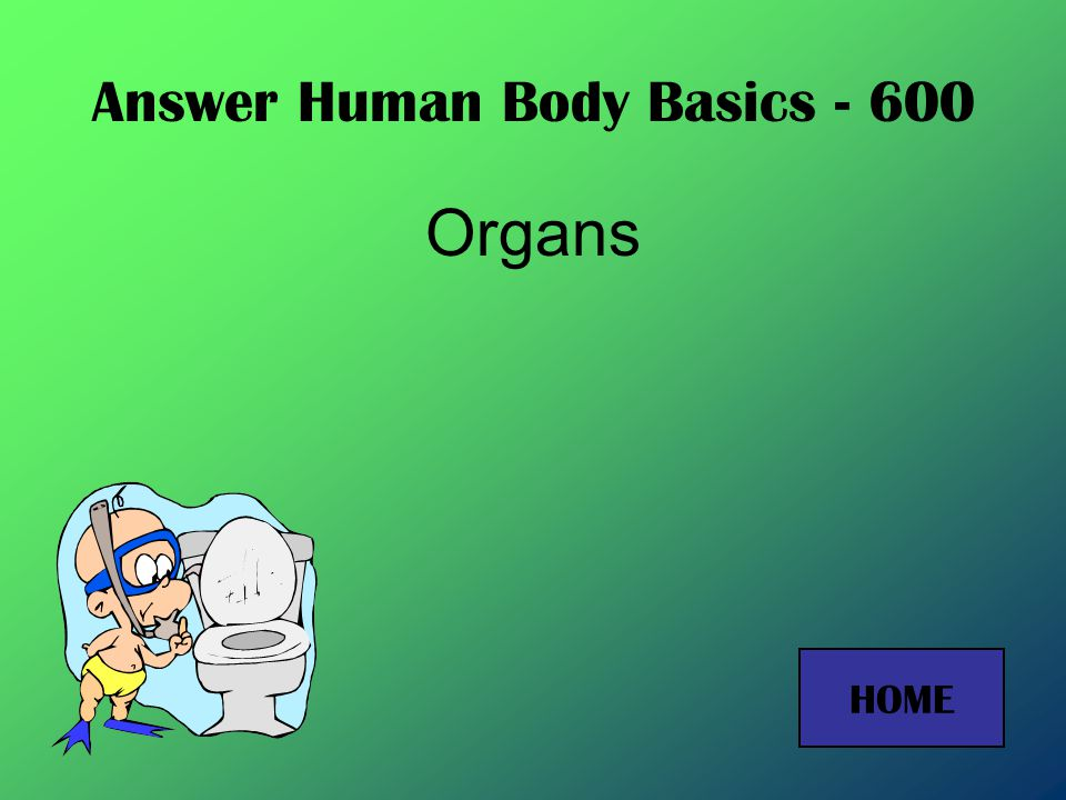 Answer Human Body Basics - 400 Nerve tissue HOME