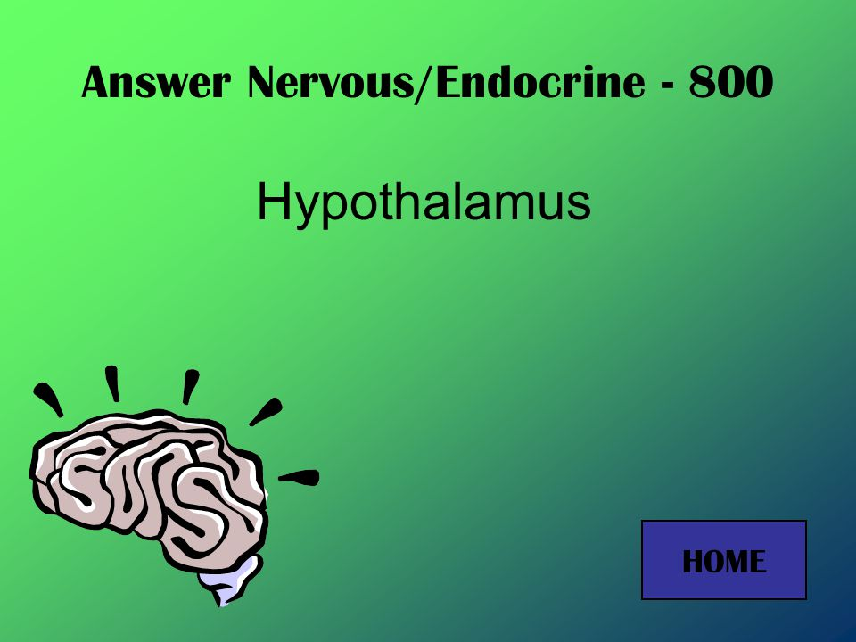 Answer Nervous/Endocrine - 600 Cerebellum HOME