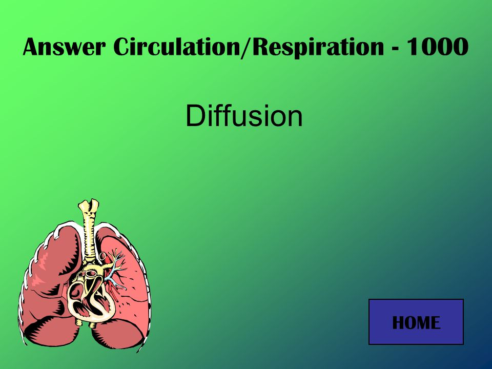 Answer Circulation/Respiration – 800 Alveoli HOME