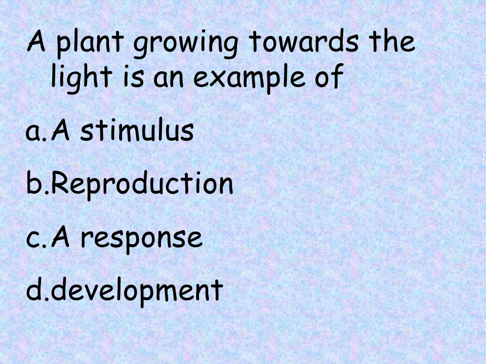 A plant growing towards the light is an example of a.A stimulus b.Reproduction c.A response d.development
