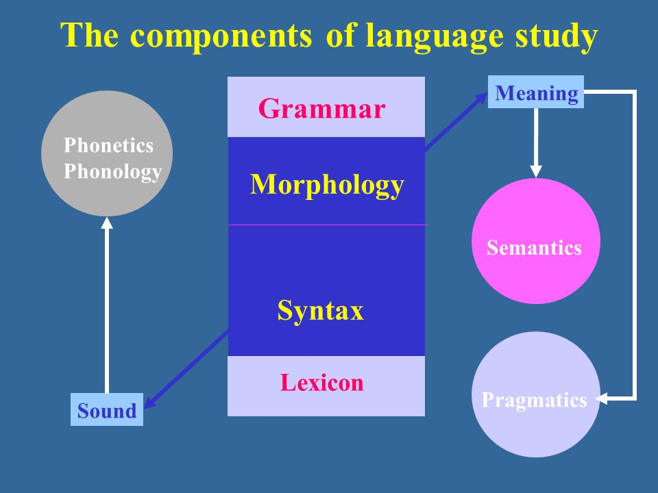 The components of language study Sound Meaning Grammar Lexicon Morphology Syntax Pragmatics Semantics Phonetics Phonology