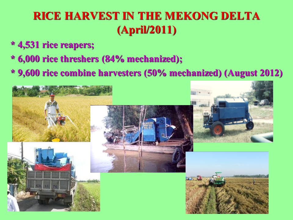 RICE HARVEST IN THE MEKONG DELTA (April/2011) * 4,531 rice reapers; * 6,000 rice threshers (84% mechanized); * 9,600 rice combine harvesters (50% mech
