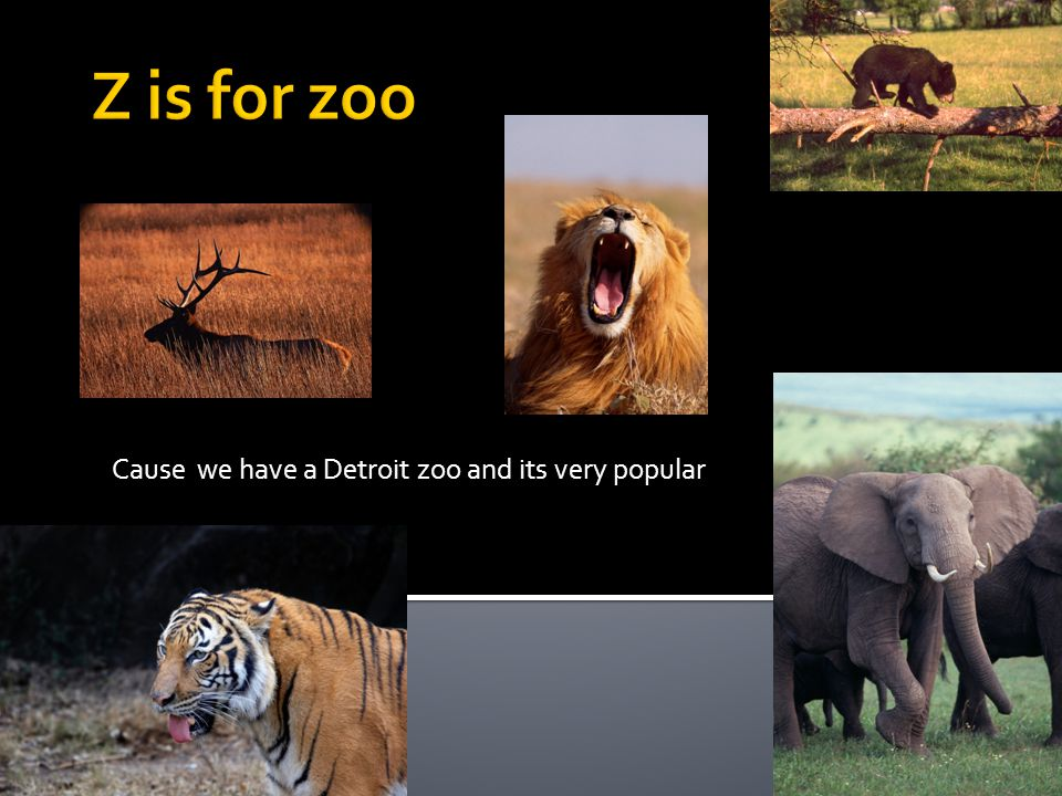 Cause we have a Detroit zoo and its very popular