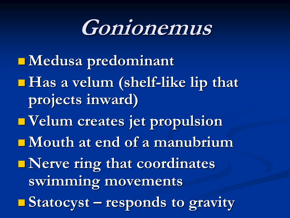 Gonionemus Medusa predominant Medusa predominant Has a velum (shelf-like lip that projects inward) Has a velum (shelf-like lip that projects inward) V