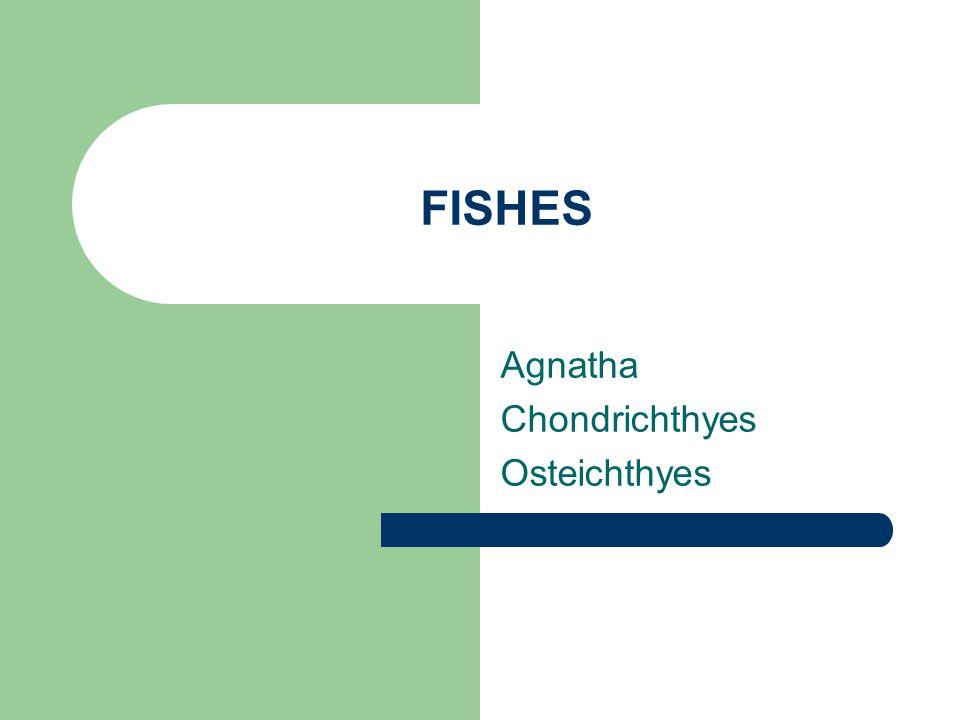 FISHES Agnatha Chondrichthyes Osteichthyes