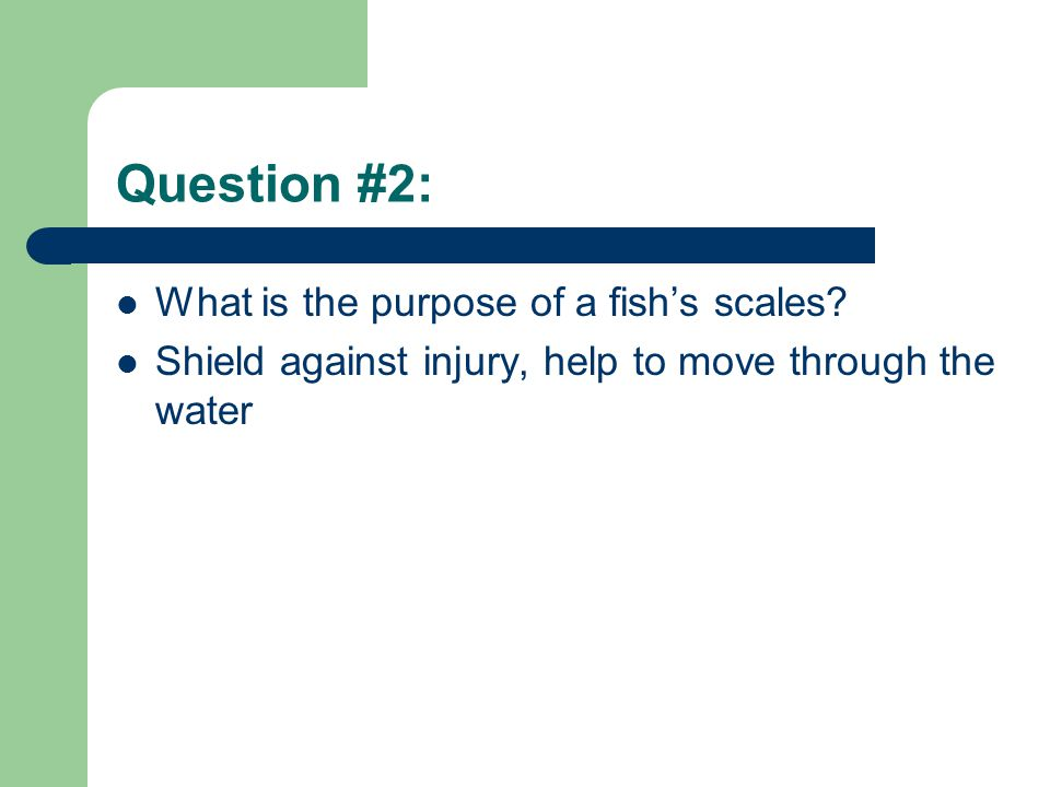 Question #2: What is the purpose of a fish's scales? Shield against injury, help to move through the water