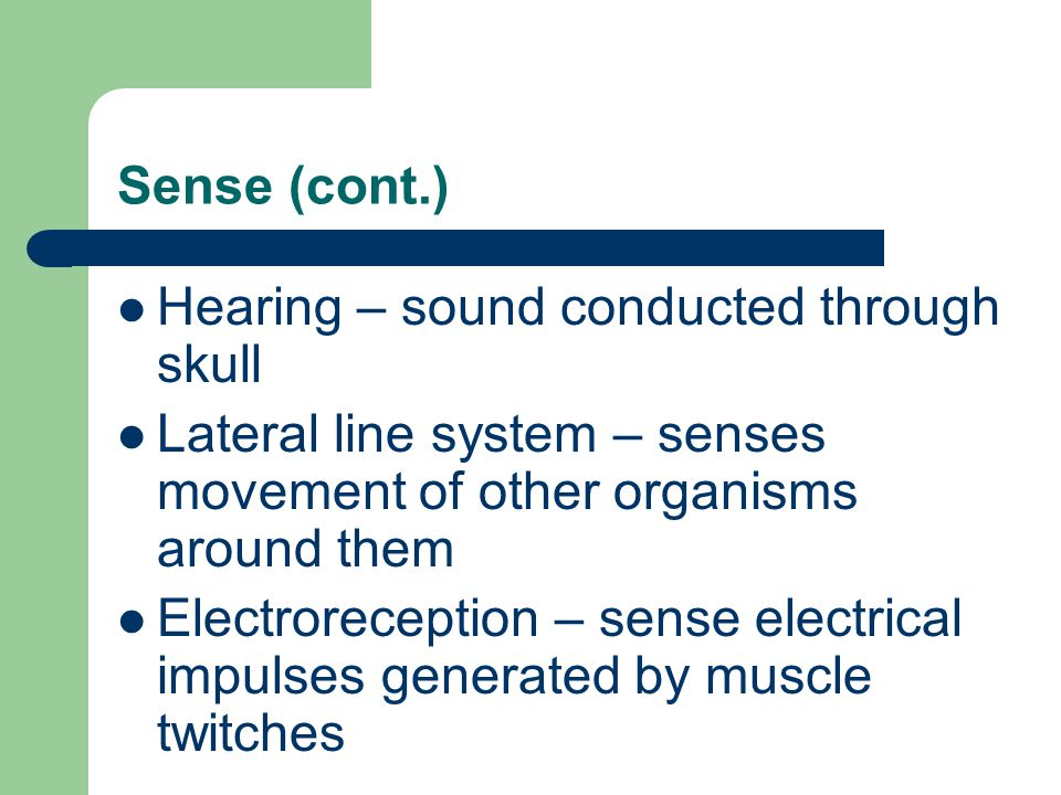 Sense (cont.) Hearing – sound conducted through skull Lateral line system – senses movement of other organisms around them Electroreception – sense el