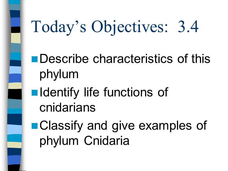 Phylum Cnidaria Animals with stinging cells