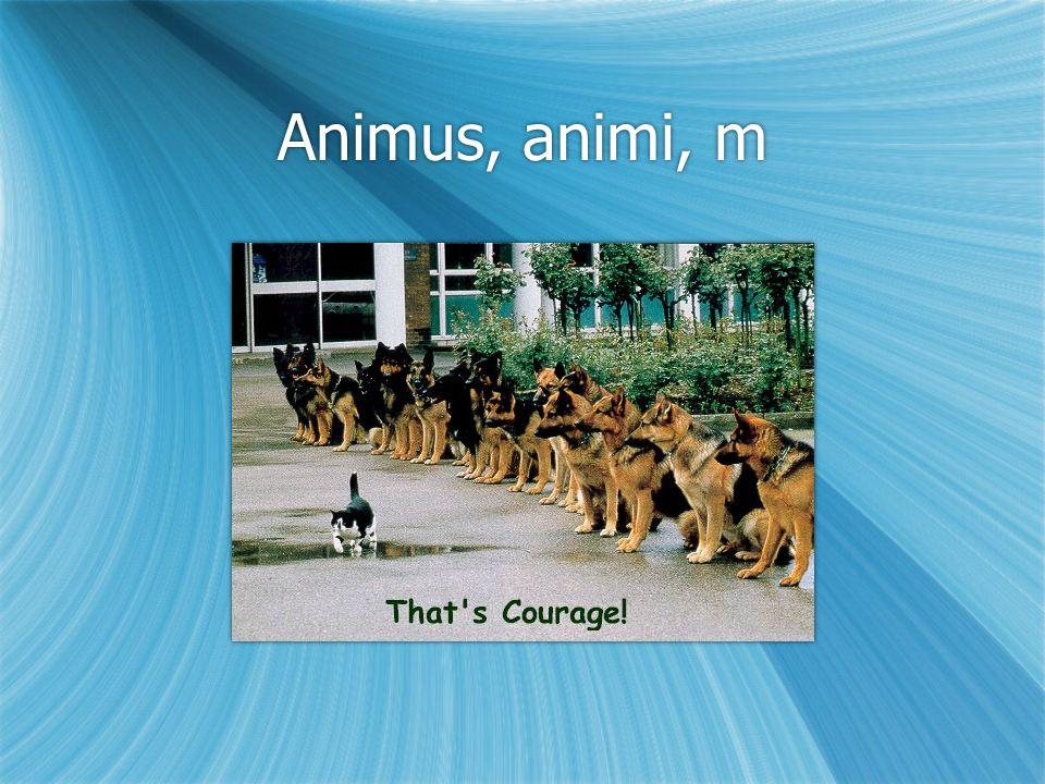 Animus, animi, m