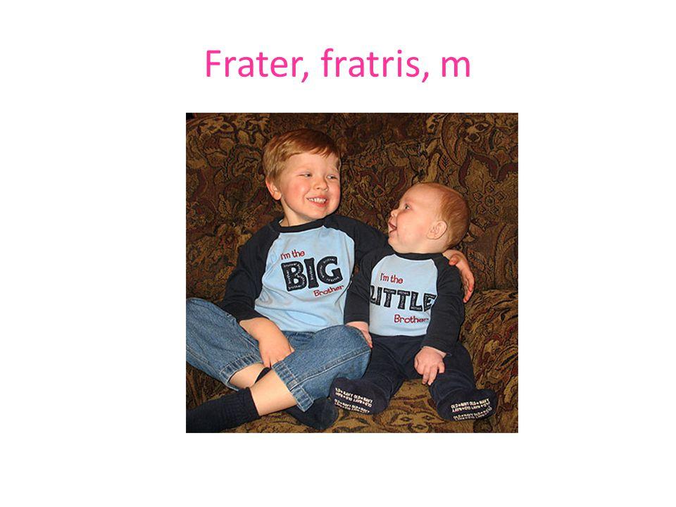 Frater, fratris, m