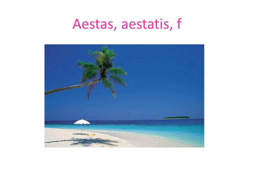 Aestas, aestatis, f
