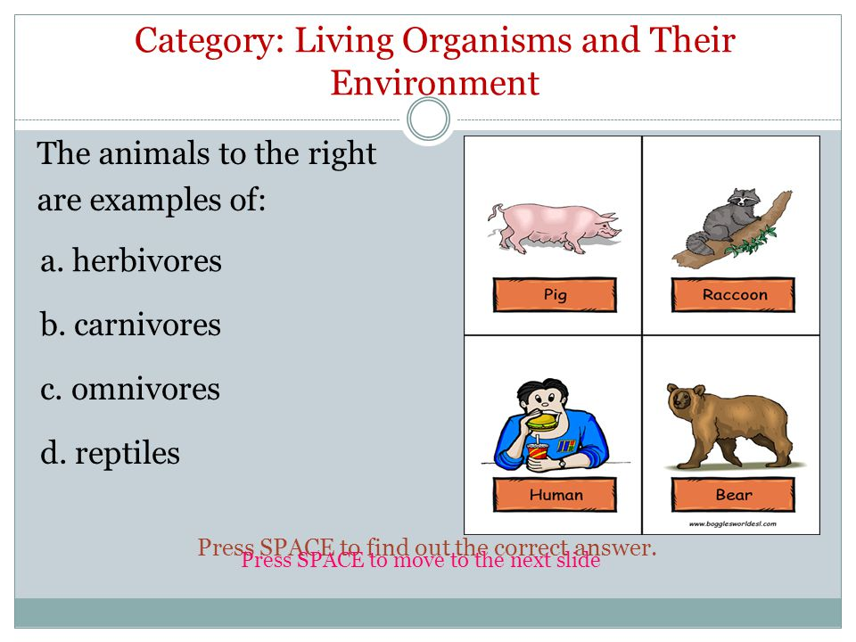 The animals to the right are examples of: c. omnivores a.