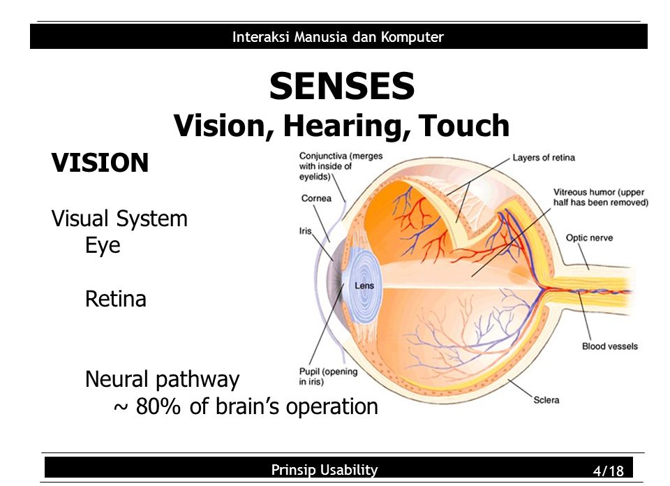 Usability Principles 5/18 Interaksi Manusia dan Komputer Prinsip Usability 5/18 Sensitivity  luminance: 10 -6 ~10 7 mL (see notes) Acuity  detection, alignment, recognition (visual angle)  retinal position: fovea has best acuity Movement  tracking, reading, vibrations Note: Vision decreases with age Implications (??)  Font size & location depends on task  Much done by context & grouping Visual Abilities