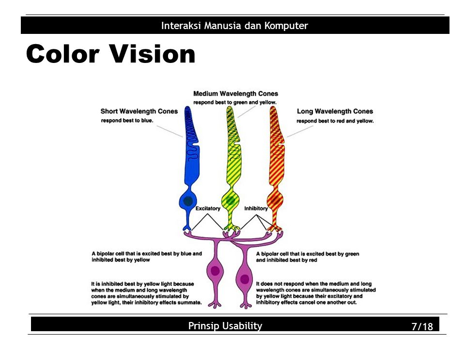 Usability Principles 7/18 Interaksi Manusia dan Komputer Prinsip Usability 7/18 Color Vision