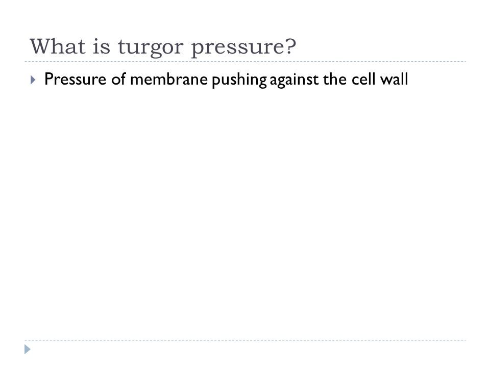 What is turgor pressure?  Pressure of membrane pushing against the cell wall