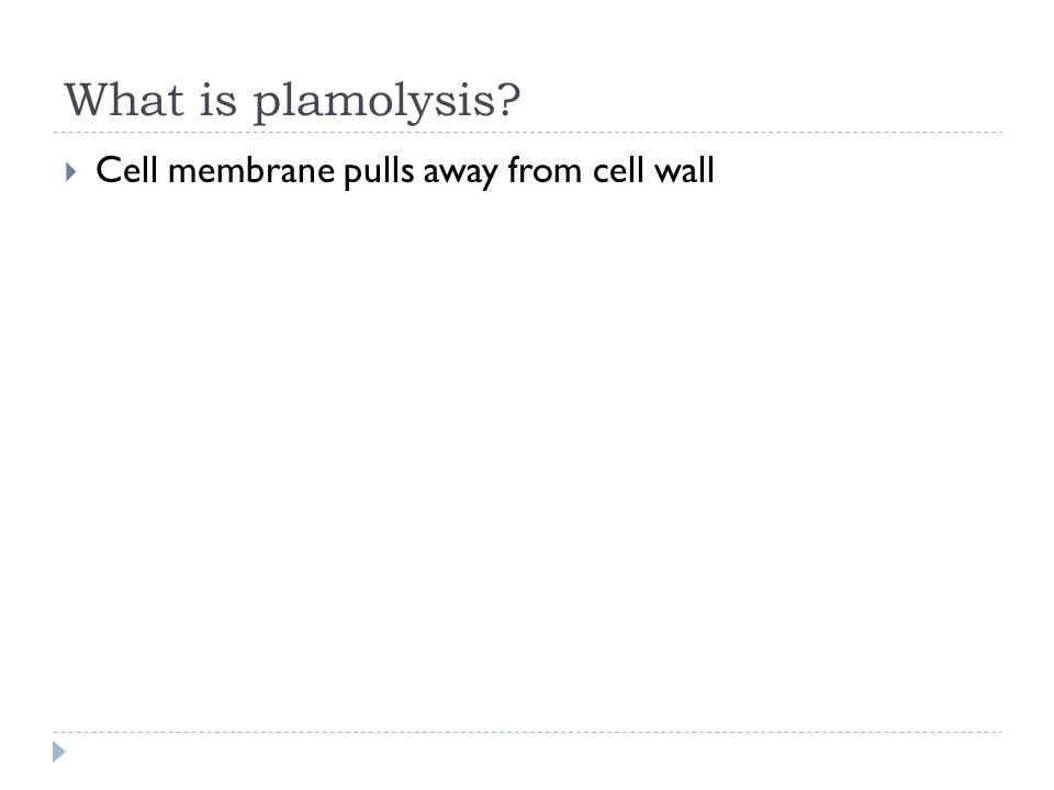 What is plamolysis?  Cell membrane pulls away from cell wall