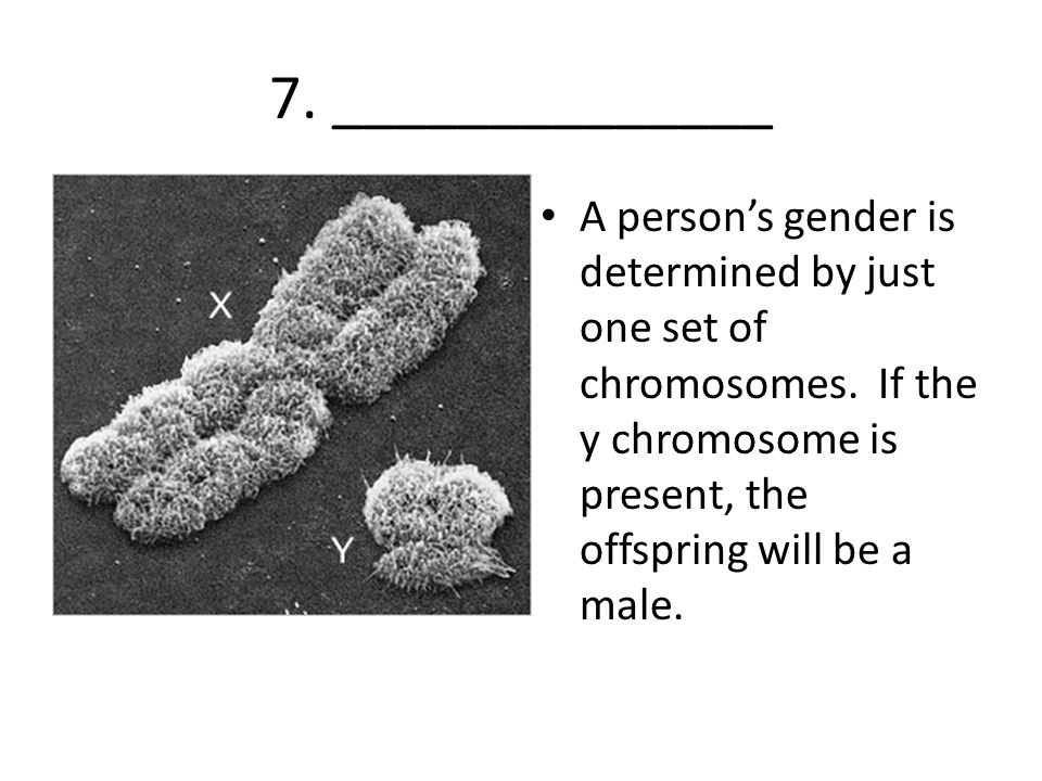 7. ______________ A person's gender is determined by just one set of chromosomes. If the y chromosome is present, the offspring will be a male.