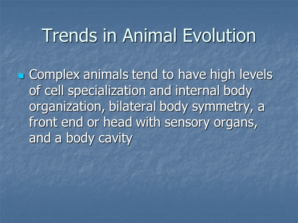 Reproduction Some animals reproduce asexually Some animals reproduce asexually Some animals can switch between asexual and sexual reproduction Some animals can switch between asexual and sexual reproduction Most animals, however, reproduce sexually Most animals, however, reproduce sexually Internal Internal External External Some are even hermaphroditic Some are even hermaphroditic