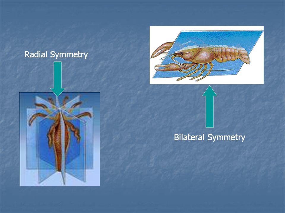 Body Symmetry 2.