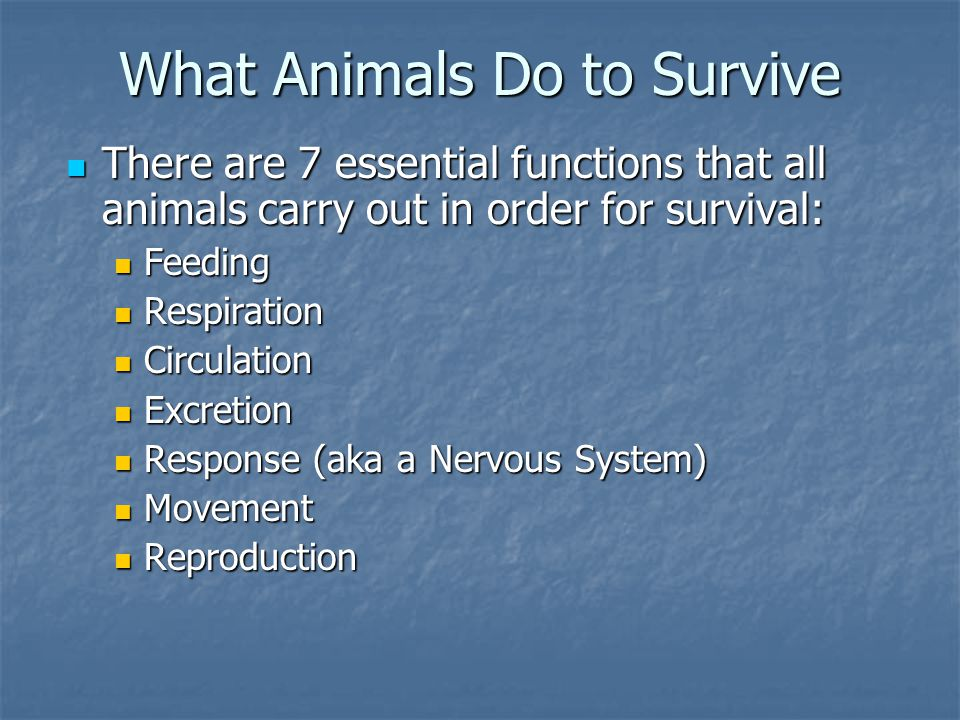 What is an Animal?.