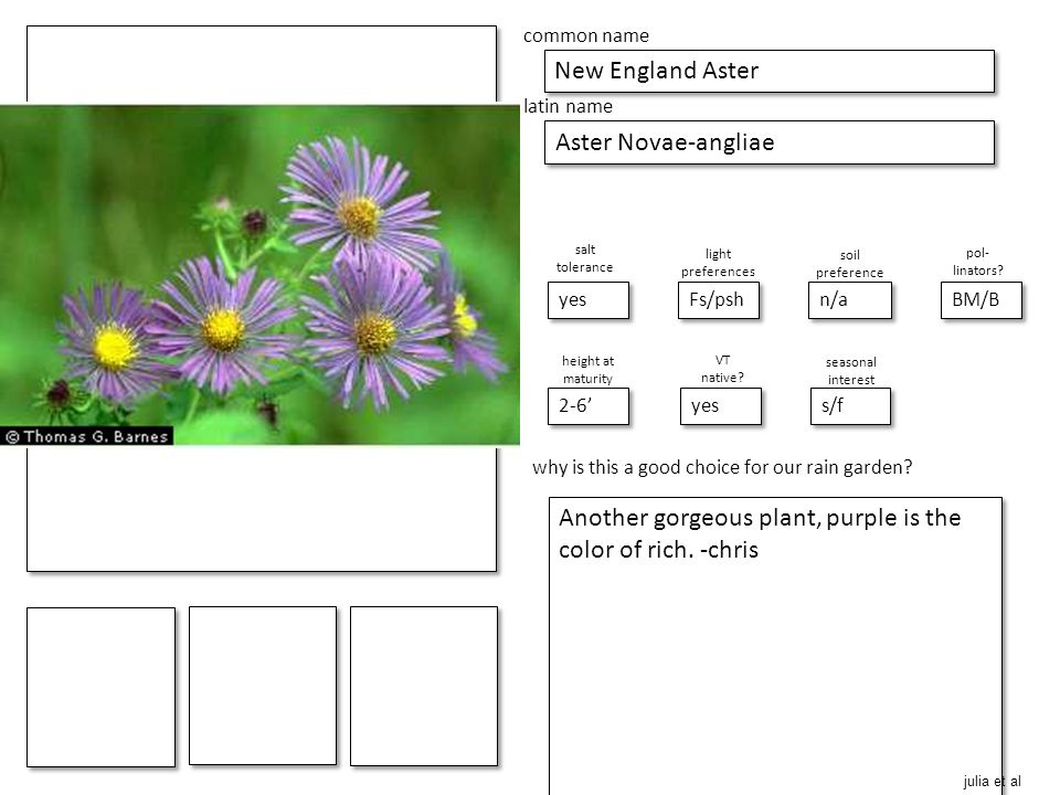 place picture here make blank copies of this slide place picture here make blank copies of this slide common name New England Aster latin name Aster Novae-angliae salt tolerance yes light preferences 2-6' pol- linators.