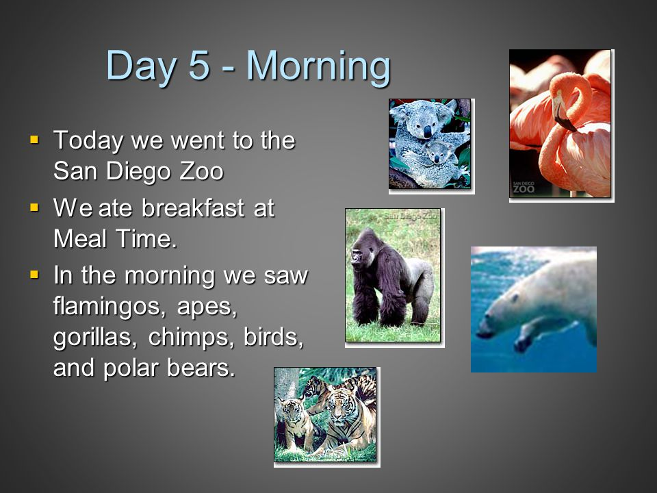 Day 5 - Morning  Today we went to the San Diego Zoo  We ate breakfast at Meal Time.