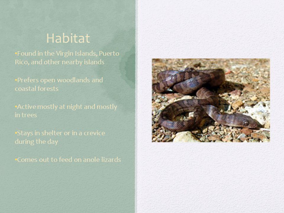Taxonomy Kingdom: Animalia Phylum: Chordata Class: Reptilia Order: Squamata Family: Boidae Genus: Epicrates Specific Name: Monensis Subspecies: Granti Scientific Name: Epicrates Monensis Granti