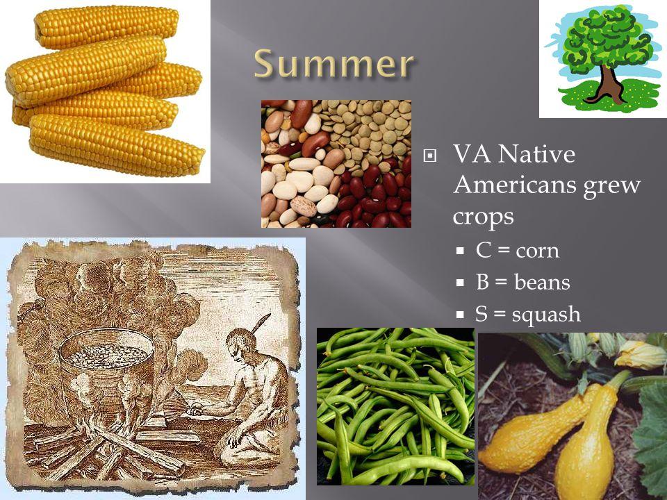  VA Native Americans grew crops  C = corn  B = beans  S = squash
