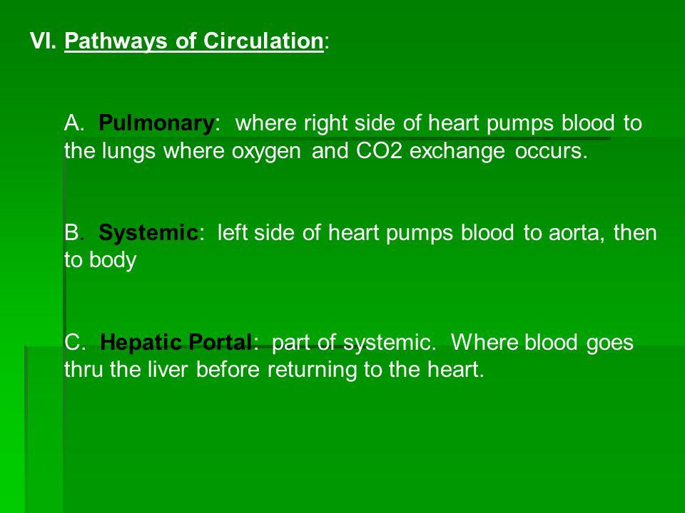 VI.Pathways of Circulation: A.