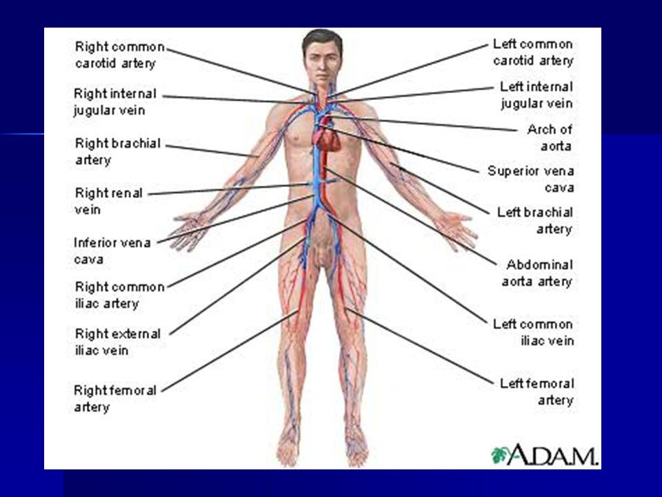 As we age, the artery walls weaken.Cholesterol deposits inside the walls.