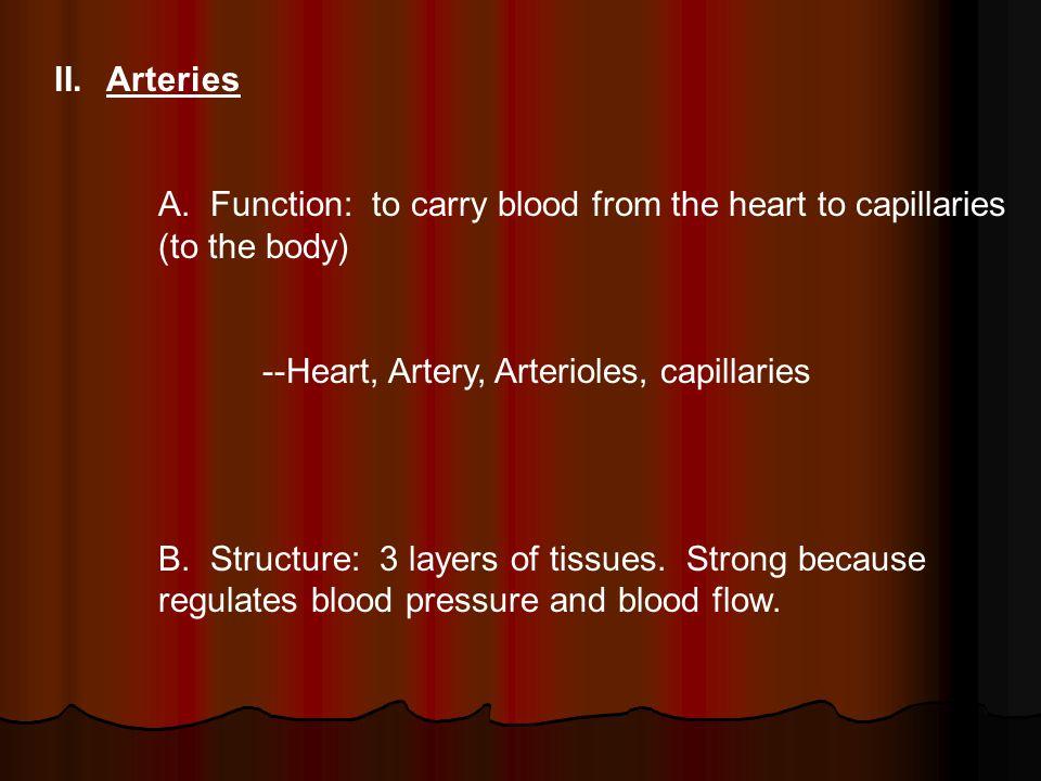 II.Arteries A.