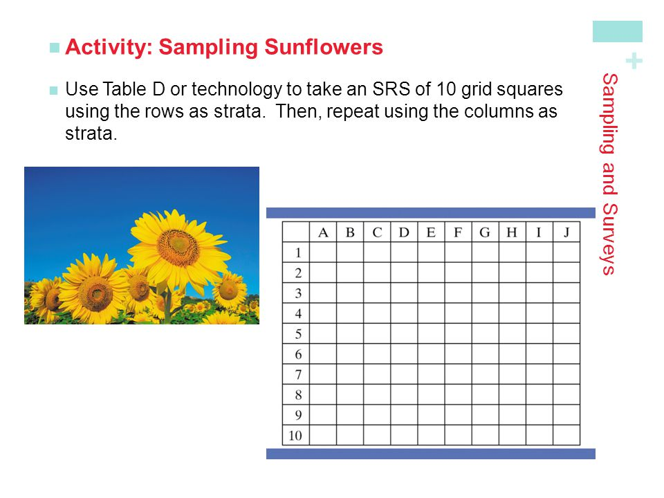 + Sampling and Surveys Activity: Sampling Sunflowers Use Table D or technology to take an SRS of 10 grid squaresusing the rows as strata. Then, repeat