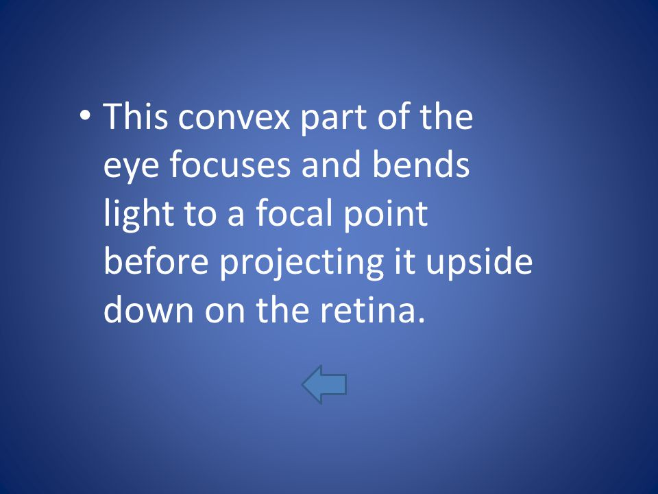 This convex part of the eye focuses and bends light to a focal point before projecting it upside down on the retina.