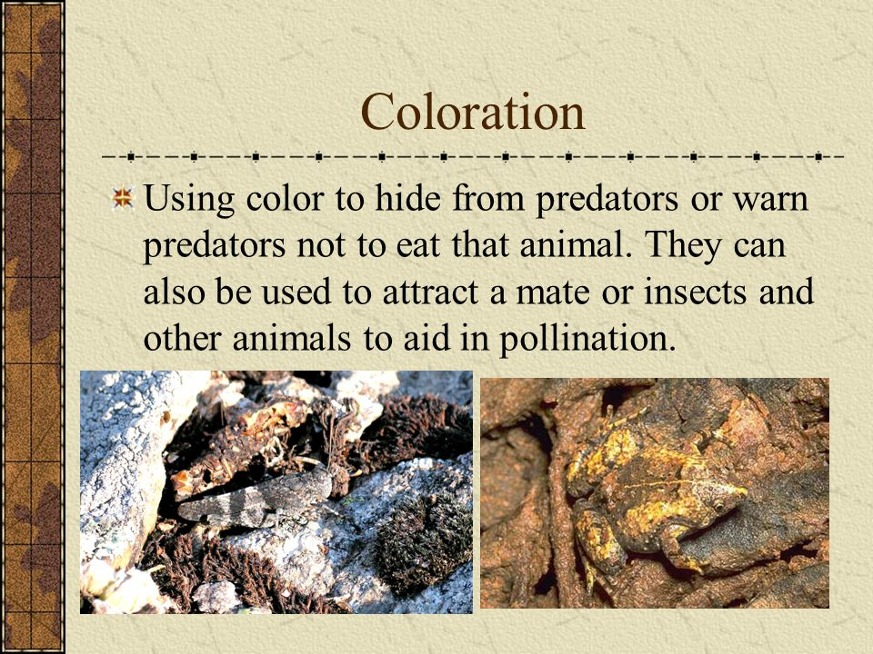 Coloration Using color to hide from predators or warn predators not to eat that animal. They can also be used to attract a mate or insects and other a