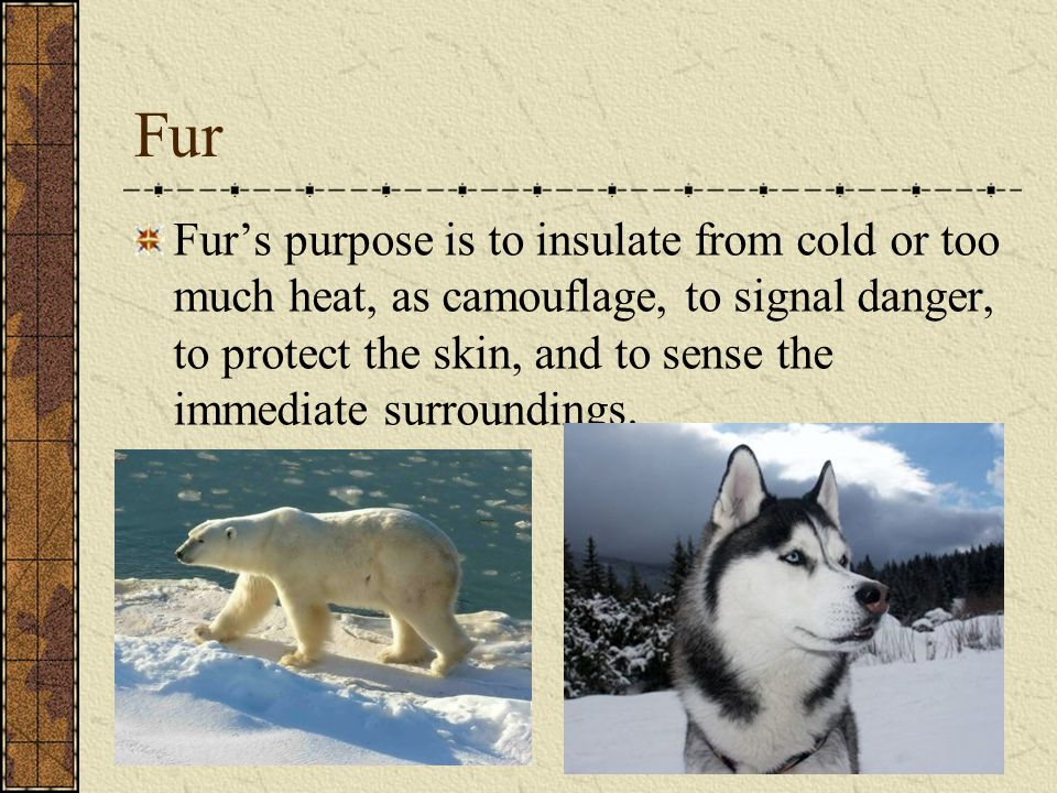 Fur Fur's purpose is to insulate from cold or too much heat, as camouflage, to signal danger, to protect the skin, and to sense the immediate surround