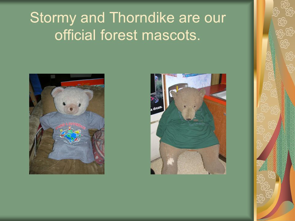 Stormy and Thorndike are our official forest mascots.