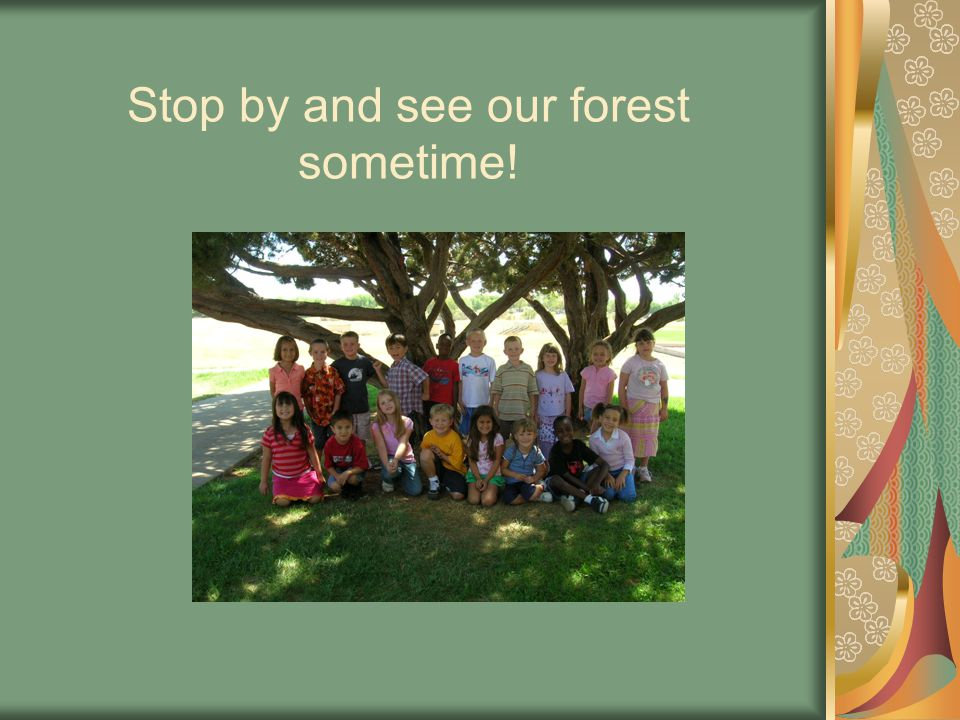 Stop by and see our forest sometime!