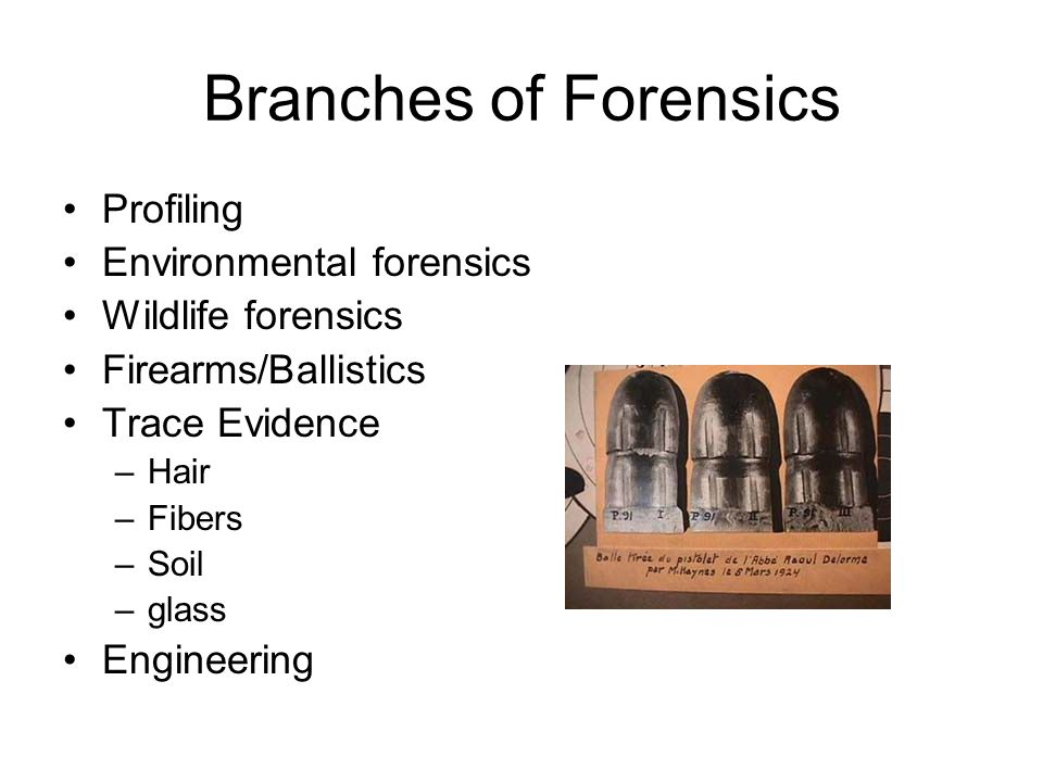 Branches of Forensics Profiling Environmental forensics Wildlife forensics Firearms/Ballistics Trace Evidence –Hair –Fibers –Soil –glass Engineering