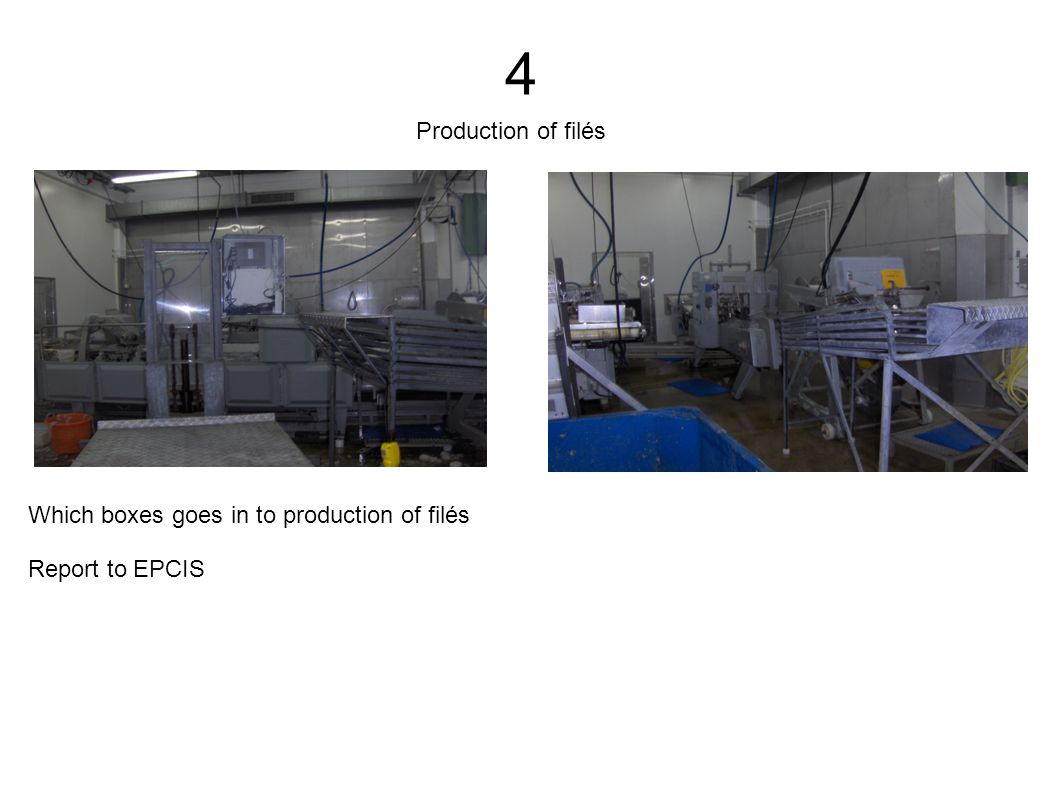 4 Which boxes goes in to production of filés Report to EPCIS Production of filés
