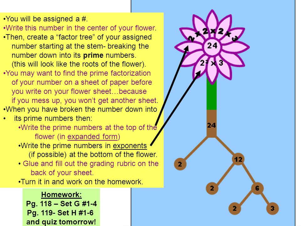 """You will be assigned a #. Write this number in the center of your flower. Then, create a """"factor tree"""" of your assigned number starting at the stem- b"""