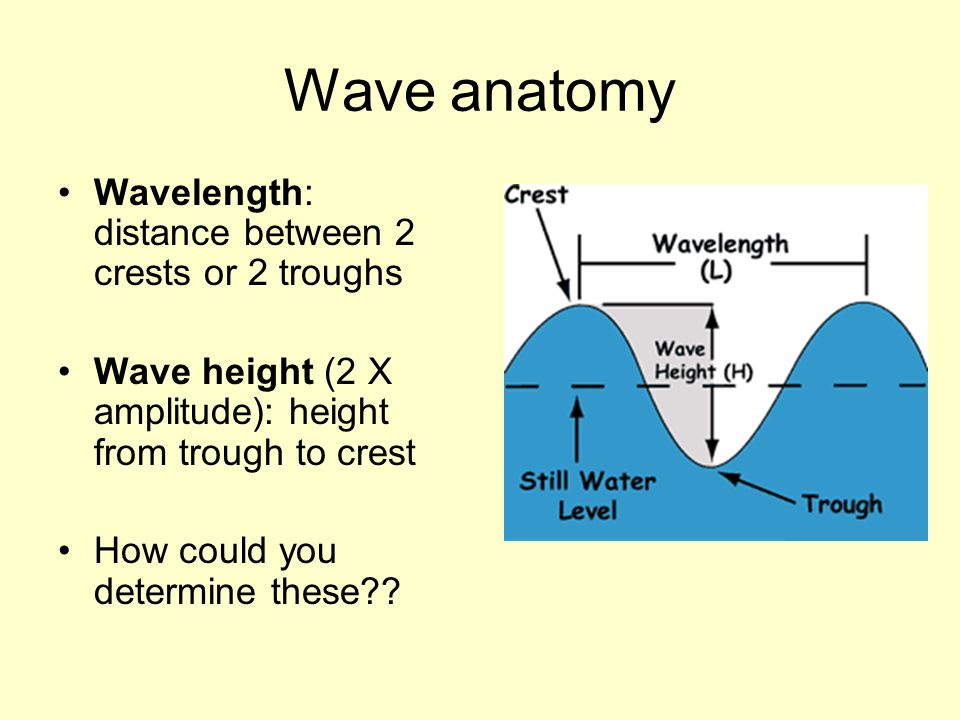 Wave anatomy Wavelength: distance between 2 crests or 2 troughs Wave height (2 X amplitude): height from trough to crest How could you determine these