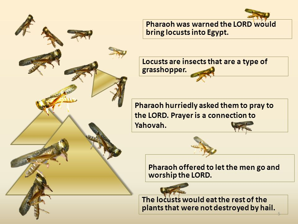 Pharaoh was warned the LORD would bring locusts into Egypt.