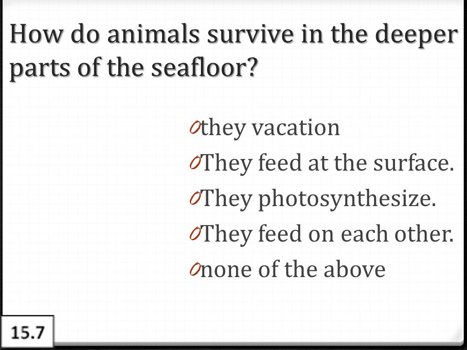 How do animals survive in the deeper parts of the seafloor? 0 they vacation 0 They feed at the surface. 0 They photosynthesize. 0 They feed on each ot