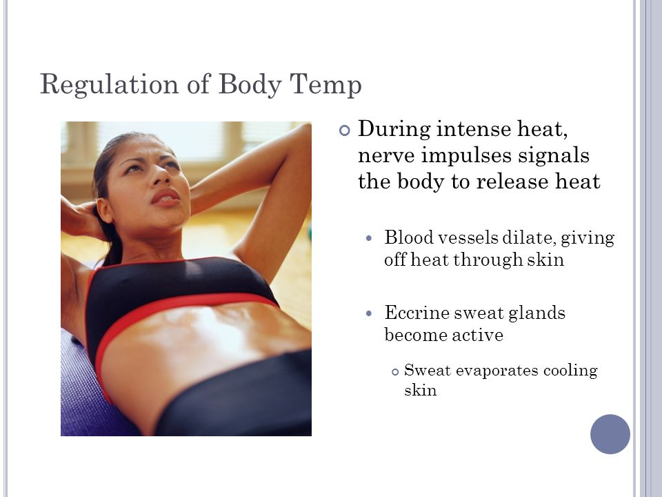 Regulation of Body Temp If too much heat is lost: Muscles in dermal wall contract Decreases blood flow and heat loss Sweat glands inactive Skeletal muscles contract involuntarily Release heat Shivering