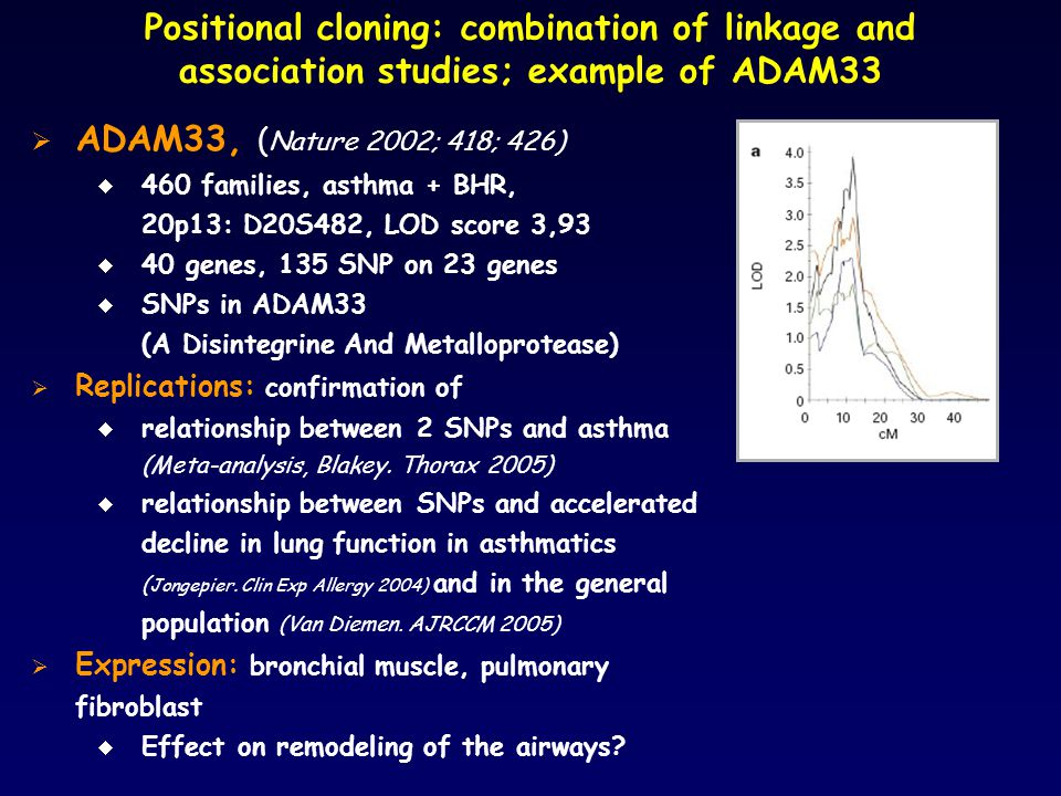 Positional cloning: combination of linkage and association studies; example of ADAM33  ADAM33, ( Nature 2002; 418; 426)  460 families, asthma + BHR, 20p13: D20S482, LOD score 3,93  40 genes, 135 SNP on 23 genes  SNPs in ADAM33 (A Disintegrine And Metalloprotease)  Replications: confirmation of  relationship between 2 SNPs and asthma (Meta-analysis, Blakey.