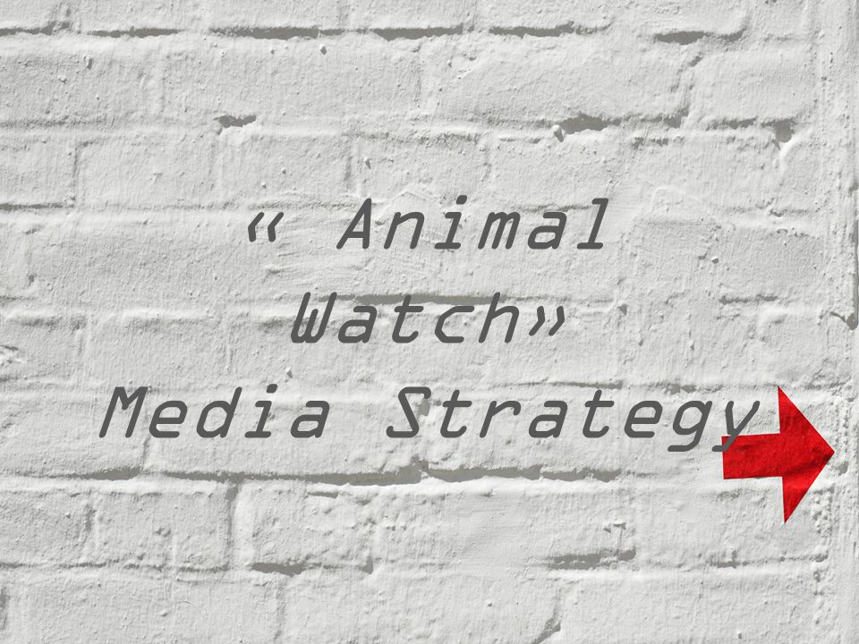 « Animal Watch» Media Strategy
