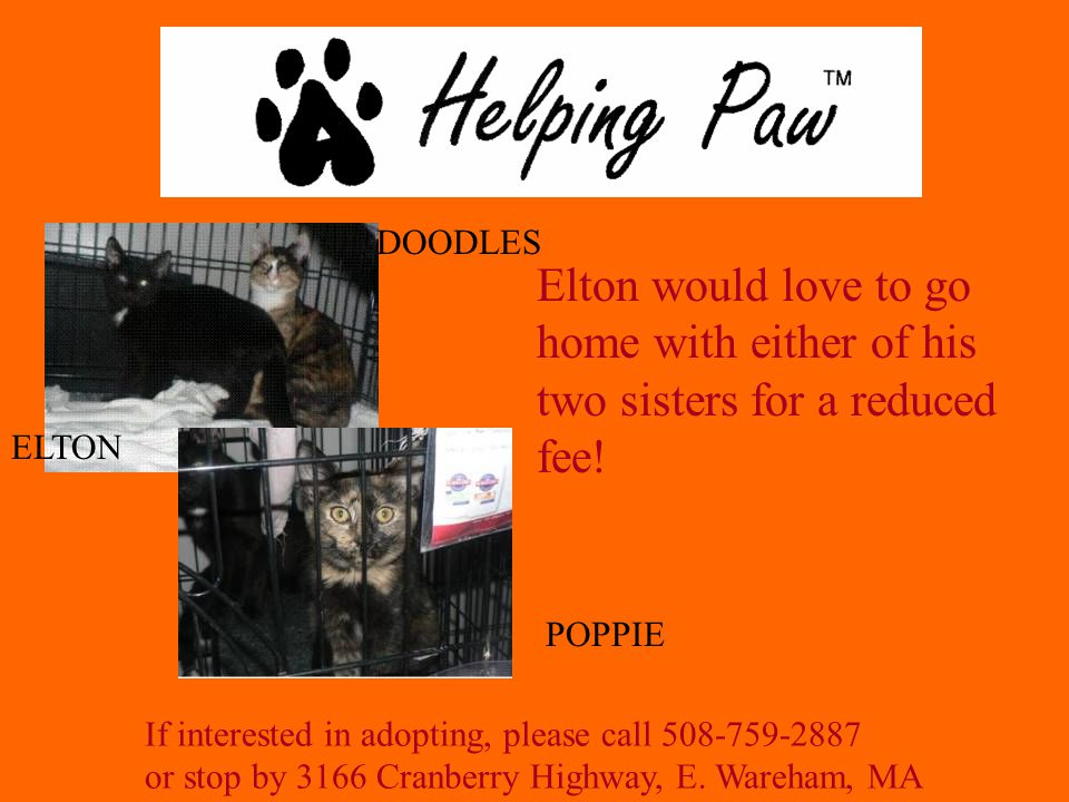 If interested in adopting, please call 508-759-2887 or stop by 3166 Cranberry Highway, E.