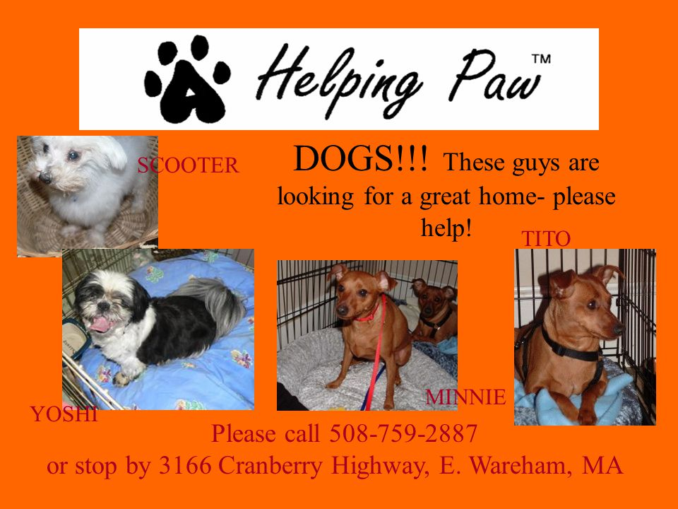 DOGS!!. These guys are looking for a great home- please help.