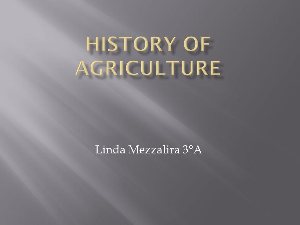 Linda Mezzalira 3°A